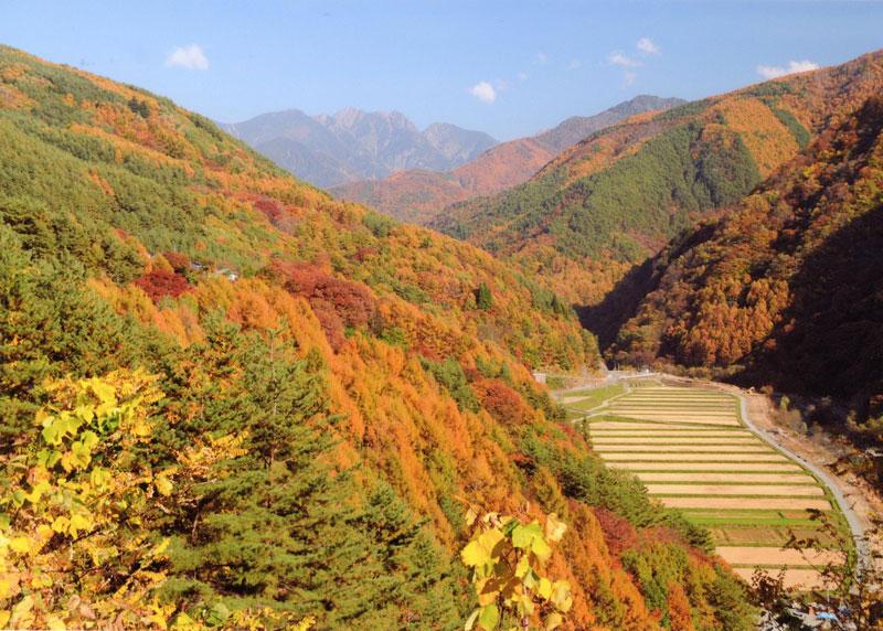 色彩豊かに色づく里山はふるさとの郷愁を誘います。【時期:10月下旬/場所:長谷黒河内】