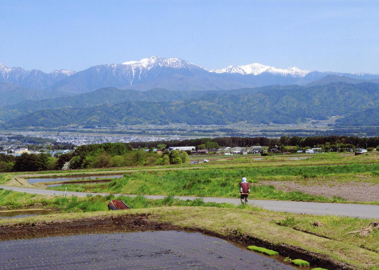 田んぼに水が入る頃、緑に染まる里山と残雪の南アルプスが美しく見えます。【時期:5月上旬/場所:西箕輪与地】
