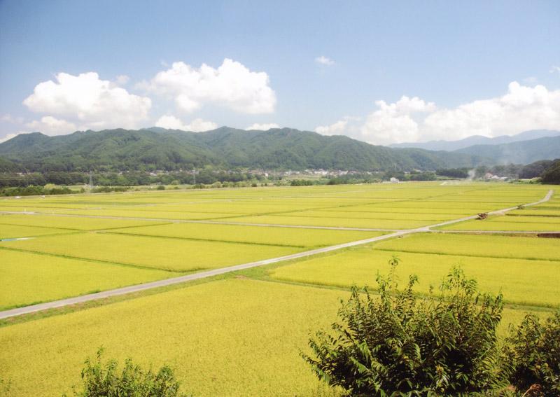 伊那市のおいしいお米の宝庫がここにあります。【時期:9月初旬/場所:高遠町上山田】