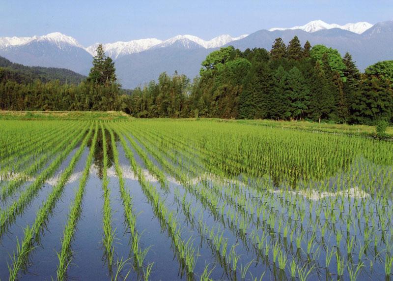 お田植えの後の水田に中央アルプスが写りこんできます。【時期:5月中旬/場所:富県北福地】